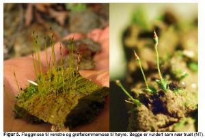 sjeldne og sårbare arter som finnes i Slemdalbekken